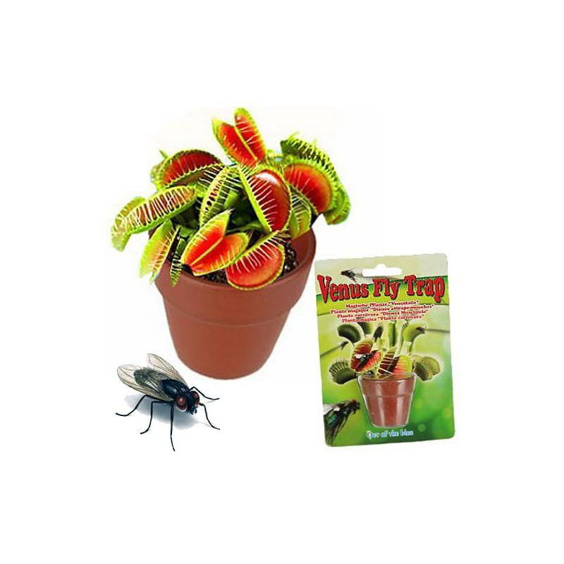 Vypěstuj si mucholapku